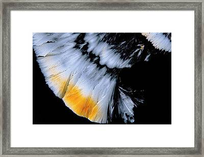 Fluoxetine Drug Framed Print by Antonio Romero