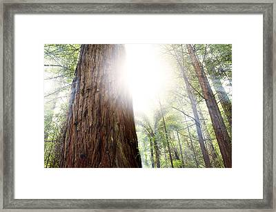 Forest Light Framed Print by Les Cunliffe