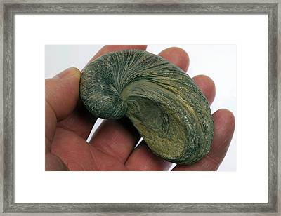 Fossilised Extinct Jurassic Oyster Framed Print