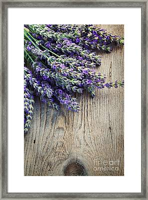 Fresh Lavender Framed Print by Mythja  Photography