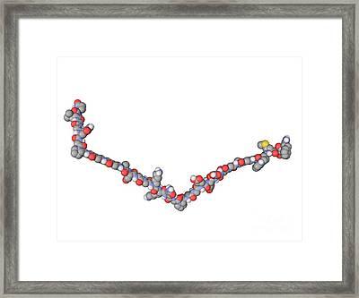Gastrin Hormone Molecule Framed Print