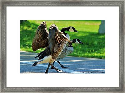 Geese Crossing Framed Print