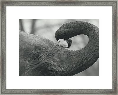 Gently Does It Framed Print by Retro Images Archive