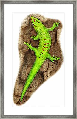 Giant Day Gecko Framed Print by Roger Hall