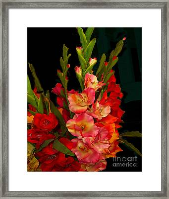 Framed Print featuring the photograph Gladiolus by Merton Allen