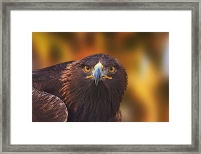 Golden Eagle  Framed Print by Brian Cross