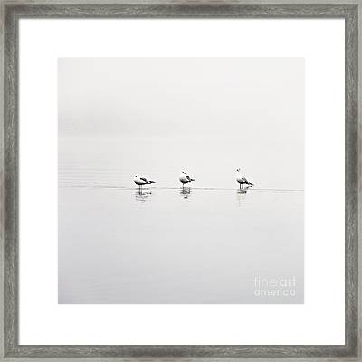 3 Gulls Framed Print by Sylvia Cook
