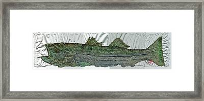 Gyotaku - Striped Bass - Rock Fish - Striper Framed Print