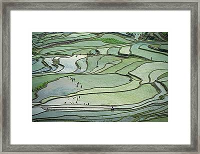 Hani Rice Terraces Near Yuanyang Framed Print by Tony Camacho