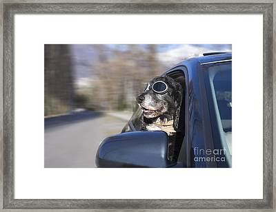 Happy Dog Framed Print by Mats Silvan