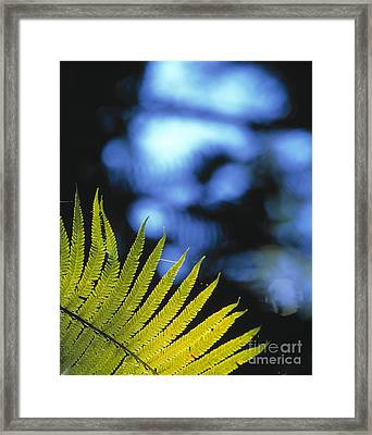 Hapuu Fern Framed Print