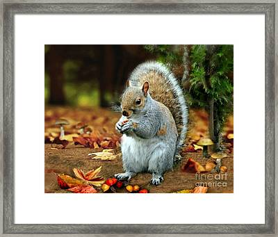 Harry The Squirrel Framed Print