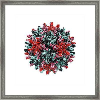 Hepatitis B Virus Particle Framed Print