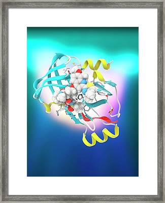Hepatitis C Drug Bound To Enzyme Framed Print by Ramon Andrade 3dciencia