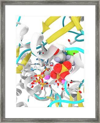 Hepatitis C Polymerase Enzyme Molecule Framed Print by Ramon Andrade 3dciencia