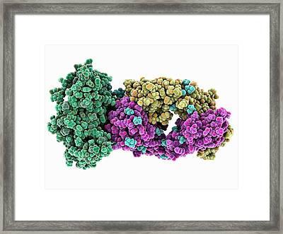 Hiv Antibody Therapy Framed Print by Laguna Design