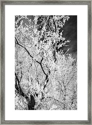 hoar frost on bare tree branches during winter Forget Saskatchewan Canada Framed Print by Joe Fox