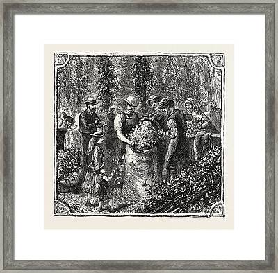 Hops And Hop Pickers, In A Kentish Hop Garden, Kent Framed Print by English School