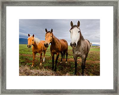 3 Horses Framed Print by Jean Noren
