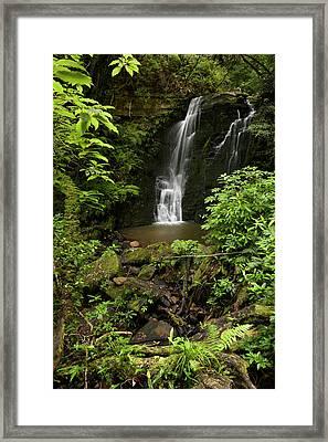 Horseshoe Falls, Matai Falls, Catlins Framed Print by David Wall