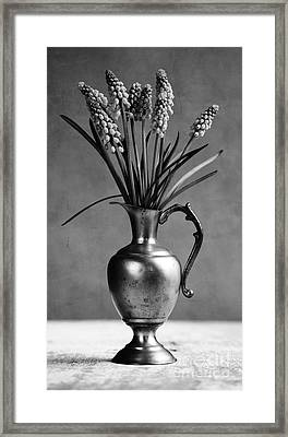 Hyacinth Still Life Framed Print