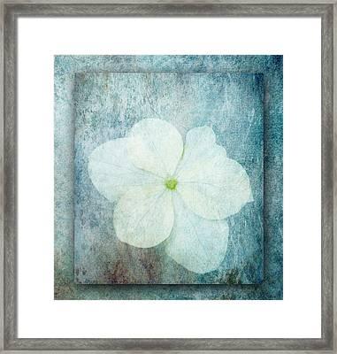 Hydrangea Framed Print by Lynn Bolt