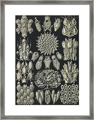 Illustration Shows Aquatic Invertebrates Framed Print by Artokoloro