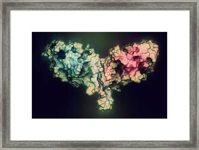 Immune Checkpoint Protein Molecule Framed Print by Molekuul/science Photo Library