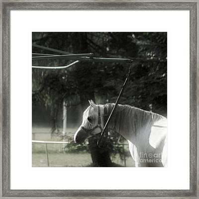 In The Captivity Framed Print by Angel  Tarantella