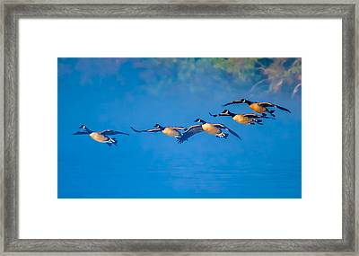 Incoming Geese Framed Print