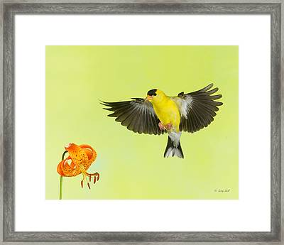 Incoming Framed Print by Gerry Sibell