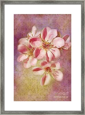 India Hawthorne Framed Print by Judi Bagwell