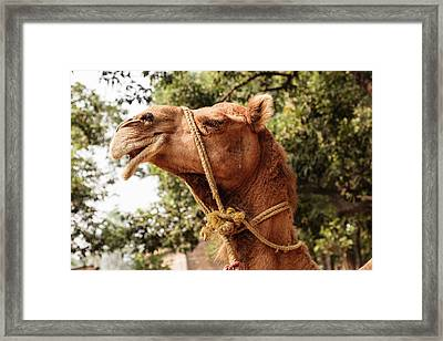India, Odisha, Subarnapur District Framed Print by Alida Latham
