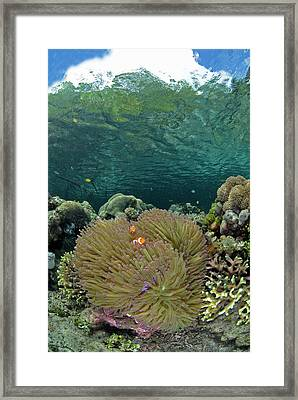 Indian Ocean, Indonesia, Raja Ampat Framed Print by Jaynes Gallery