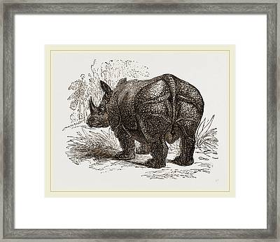 Indian Rhinoceros Framed Print by Litz Collection