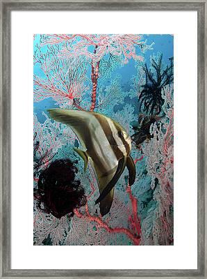 Indonesia, Papua, Raja Ampat, Se Misool Framed Print by Jaynes Gallery