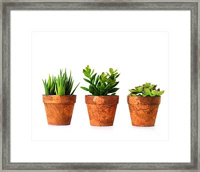3 Indoor Plants Framed Print by Boon Mee
