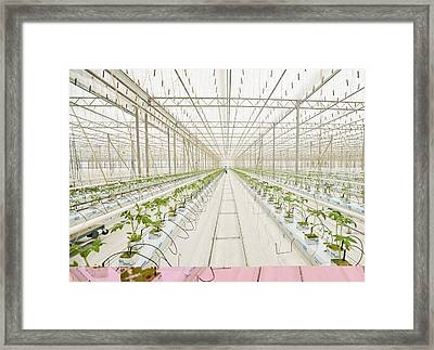 Industrial Greenhouse Framed Print