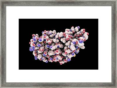 Interferon Gamma Molecule Framed Print by Kateryna Kon/science Photo Library