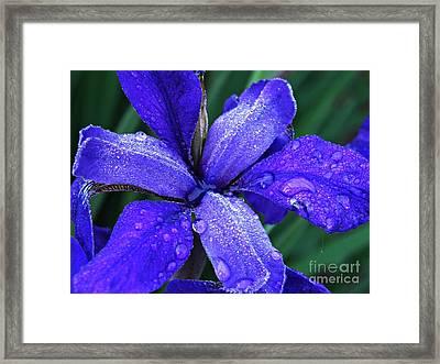 Iris 4 Framed Print