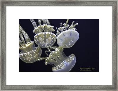 Jellyfish Of Aquarium Of The Bay San Francisco Framed Print by LeeAnn McLaneGoetz McLaneGoetzStudioLLCcom