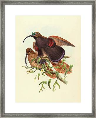 John Gould And W Framed Print by Litz Collection