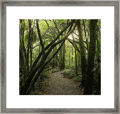 Jungle Trail Framed Print by Les Cunliffe