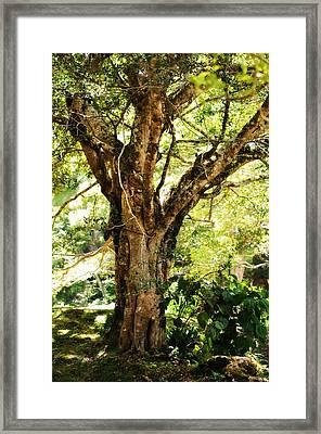 Kingdom Of The Trees. Peradeniya Botanical Garden. Sri Lanka Framed Print