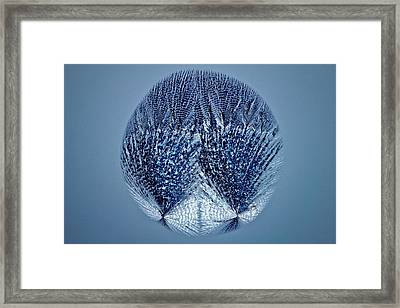 Lactose Crystals Framed Print by Antonio Romero