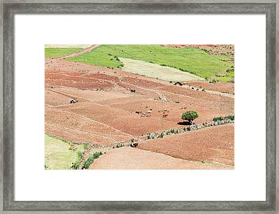 Landscape In Tigray, Northern Ethiopia Framed Print by Martin Zwick