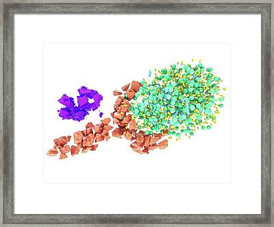 Ldl And Receptor Degradation With Pcsk9 Framed Print