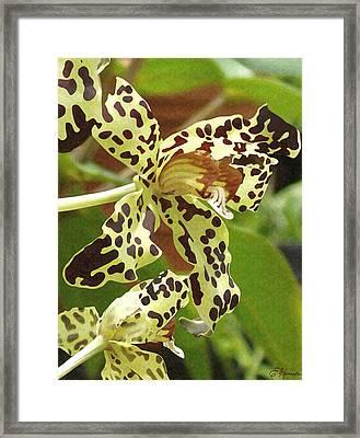 Leopard Orchids Framed Print by Ellen Henneke