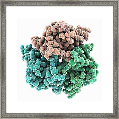 Leptin Molecule Framed Print by Science Photo Library