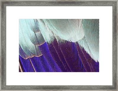 Lilac Breasted Roller Feathers Pattern Framed Print by Darrell Gulin